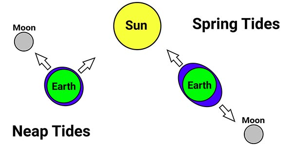 Diagram showing the effect of the sun and moon on spring and neap tides
